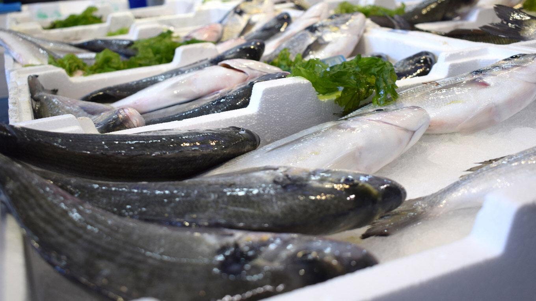 Wolfsbarsche auf einem Fischmarkt